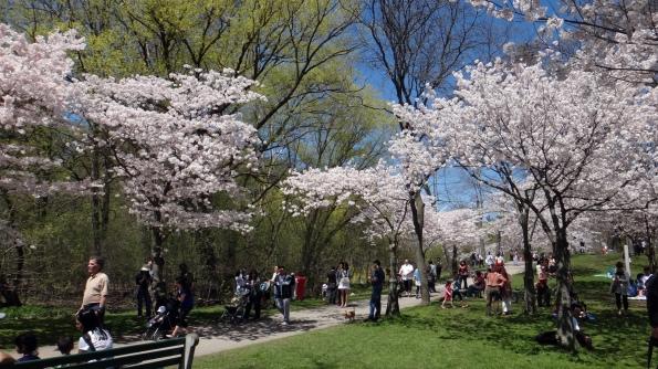 Sakuras na entrada